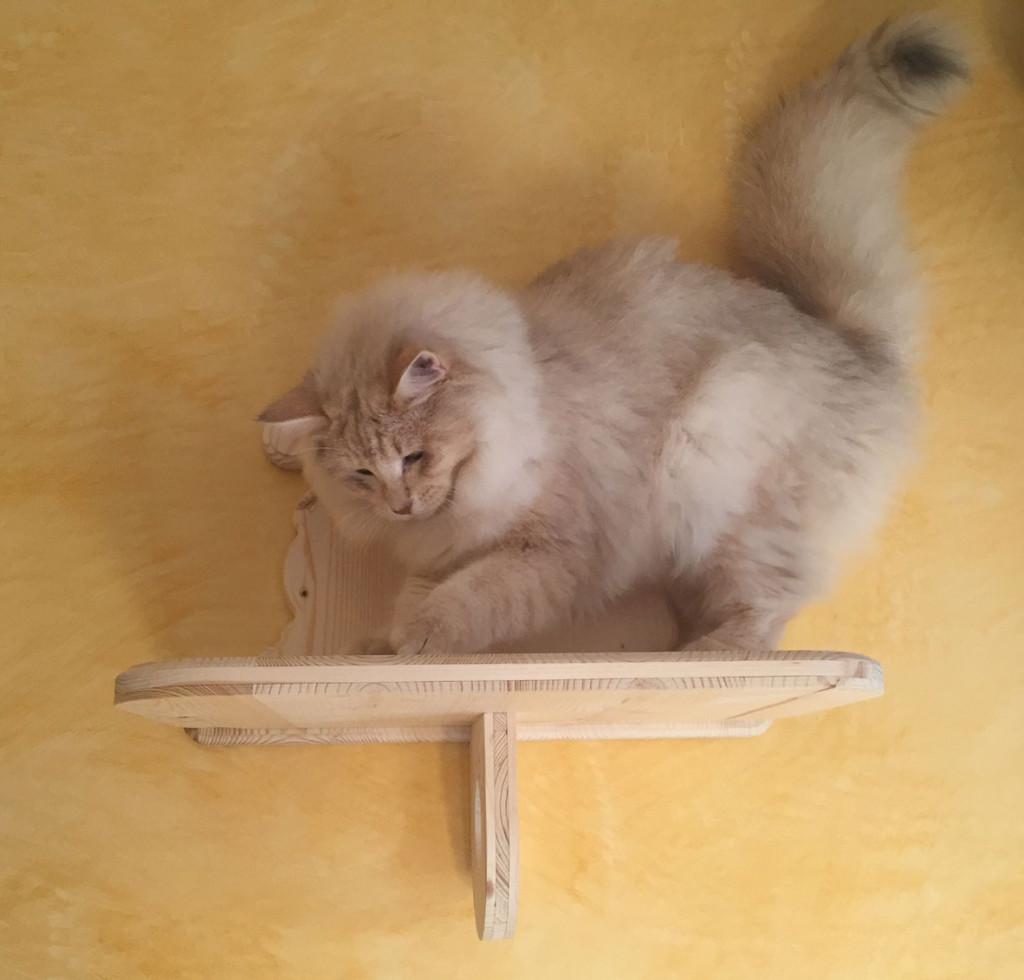 """ripiano """"gattino giocherellone"""""""