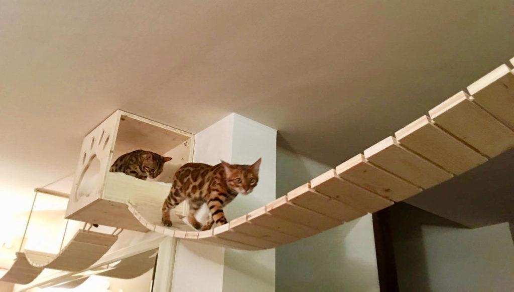 ponte e rifugio tibetano per gatti